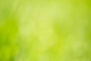 Natürlicher abstrakter Hintergrund grüne Farbe Duschrückwand